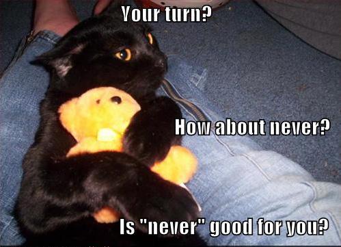 Cat_Captions12