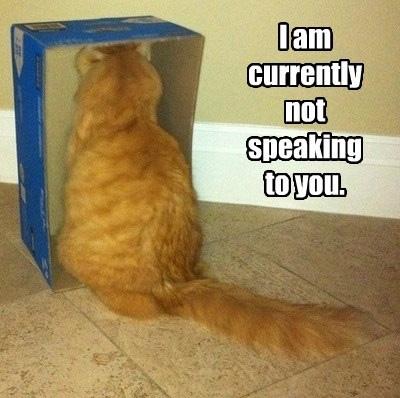 Cat_Captions36