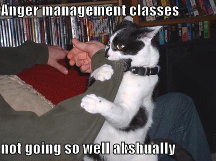 Cat_Captions20