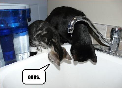 Cat_Captions26